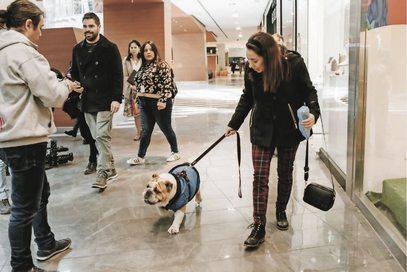 """ARTÍCULO: """"Centros comerciales también se suman a la tendencia pet friendly en el país"""""""