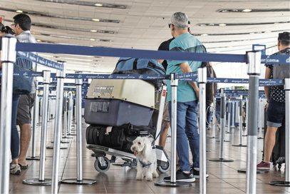 """ARTÍCULO: """"Con servicios que pueden costar hasta US$ 7.500, cada vez más mascotas vuelan al extranjero"""""""
